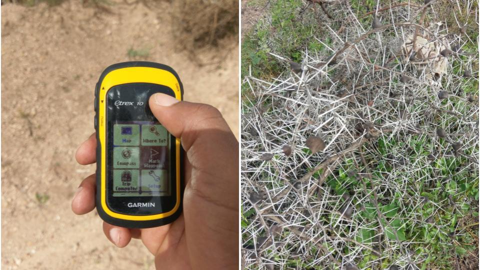 Hand-Held GPS and Briars